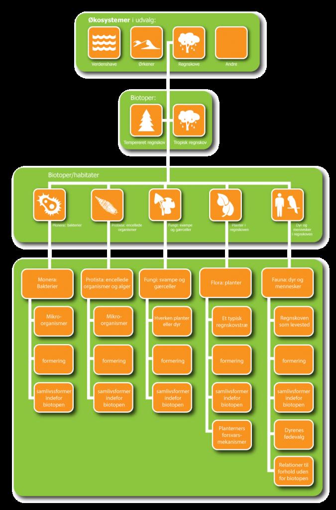 regnskove-opbygning-diagram