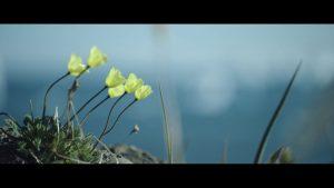 klimaaendringer i groenland film3 blomster